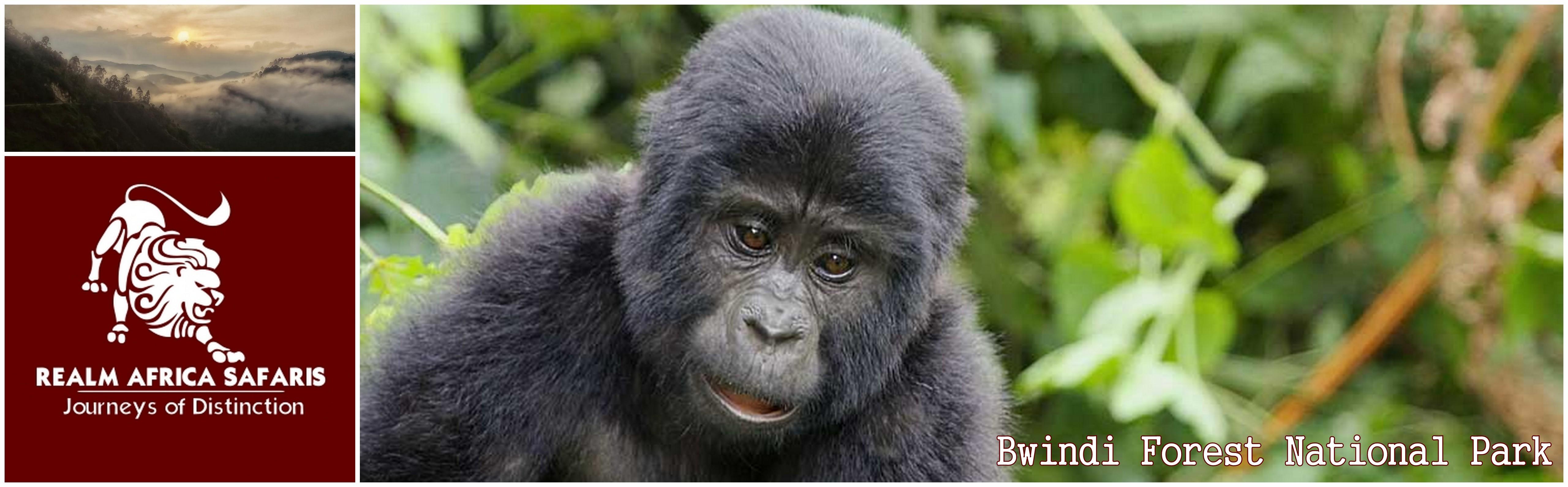 Bwindi Forest National Park Uganda