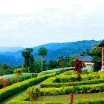 Silverback Lodge – Buhoma