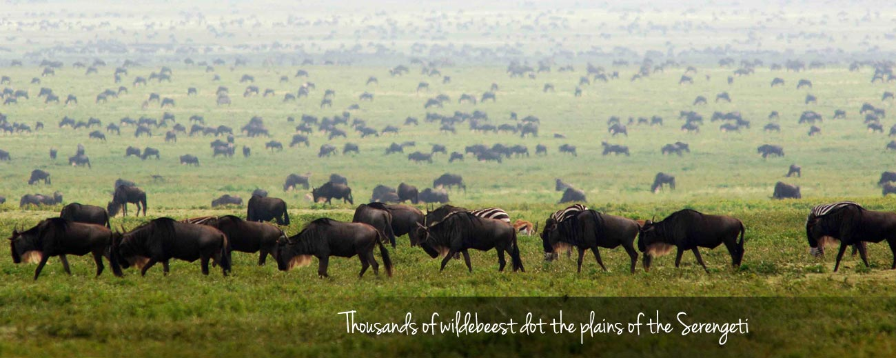 wildebeest Migration Guide