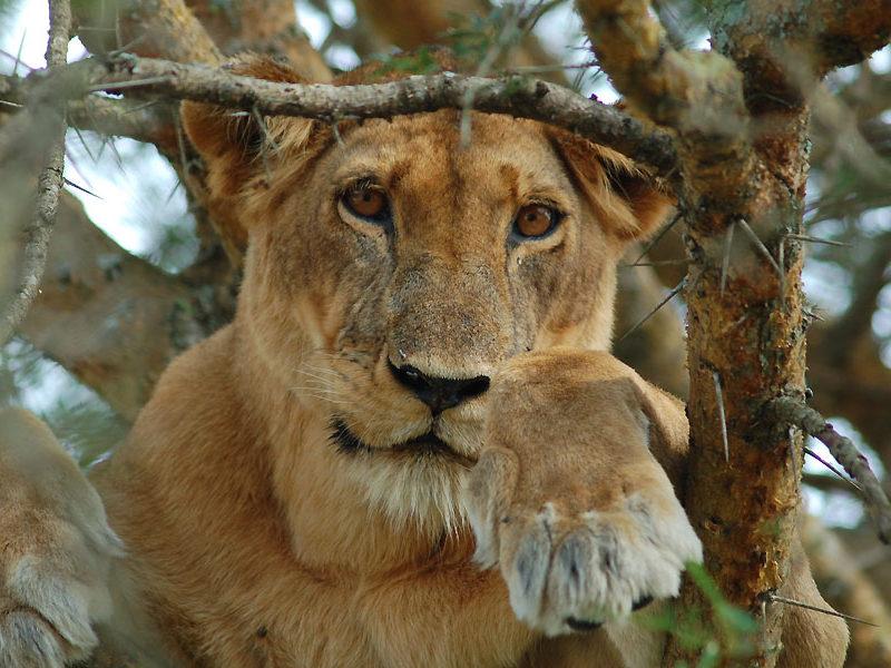 Queen Elizabeth National Park | Queen Elizabeth Safaris | Uganda Safaris | Realm Arica Safaris |