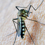 Avoid Getting Malaria while visiting East Africa