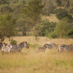 Lake Mburo Lodging Options