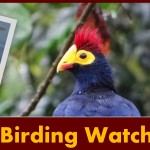 Best places for bird watching in Uganda