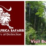 Bugoma Forest Reserve enroute Murchison Fall National Park