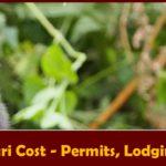Gorilla Habituation Safari Costs