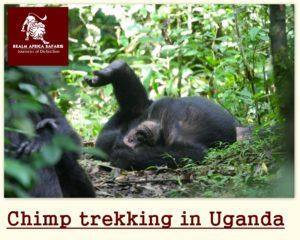 10 Days Uganda - Rwanda Gorilla Safari Holiday