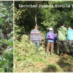 Escorted small group Uganda gorilla trekking Safaris