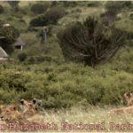 Kasenyi Safari Camp – Queen Elizabeth National Park – Uganda