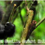 10 Days Uganda – Rwanda Gorilla Safari Holiday