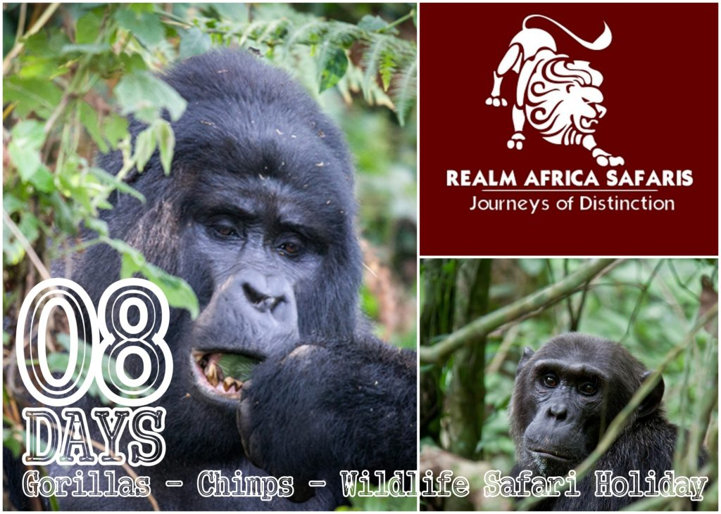 8 Days Uganda Gorilla - Chimps - Wildlife Safari Holiday