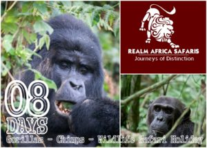 Uganda Gorilla Safaris