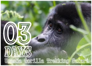 3 Days Uganda gorilla trekking Safari | Uganda Gorilla Safaris | Realm Africa Safaris - Journeys of Distinction.