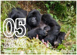 05 Days Gorillas & chimp Trekking Safari | Uganda Gorilla Safaris | Realm Africa Safaris - Journeys of Distinction