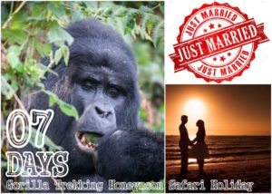 7 Days Gorilla trekking - Beach Honeymoon Holiday | Uganda gorilla Safaris | Realm Africa Safaris - Journeys of Distinction.