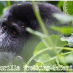 7 Days Uganda – Rwanda Gorilla Trekking Safari Holiday Tour