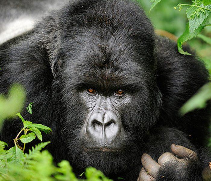 2 Day Rwanda Express Gorilla Safari