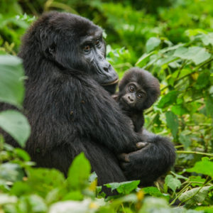 Best time to Vist Bwindi Forest | Realm Africa Safaris