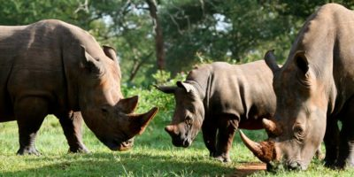 Zziwa Rhino Sanctuary   Realm Africa Safaris