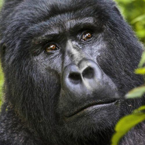 3 Day Budget Uganda Gorilla Safari - Tour