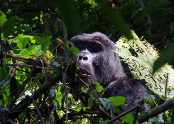 3 Day Budget Uganda Gorilla Safari - Tour | Realm Africa Safaris