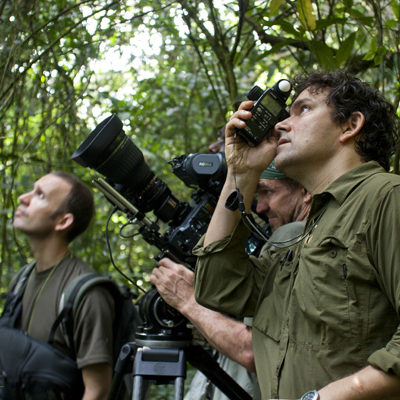 Chimpanzee Filming In Kibale Forest National Park