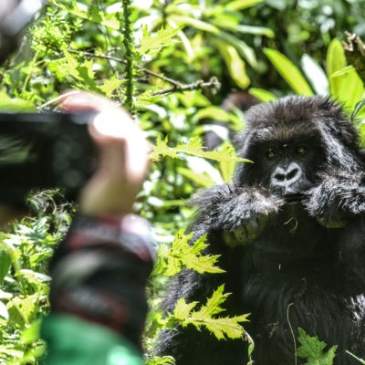 Filming in Bwindi Forest