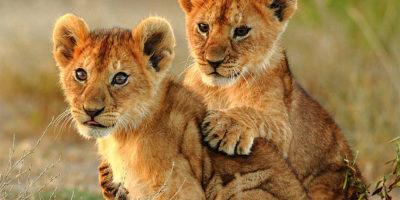 Uganda Honeymoon Safaris