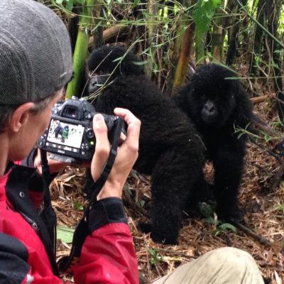 Mountain Gorilla Filming In Rwanda 2