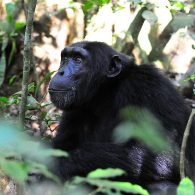 Safaris to Kibale Forest NP