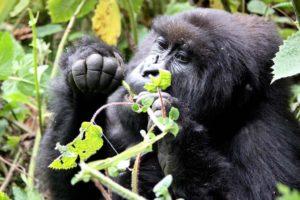 Uganda Safari - Tours   Realm Africa Safaris