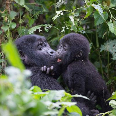 3 Days Budget Uganda Gorilla Safaris