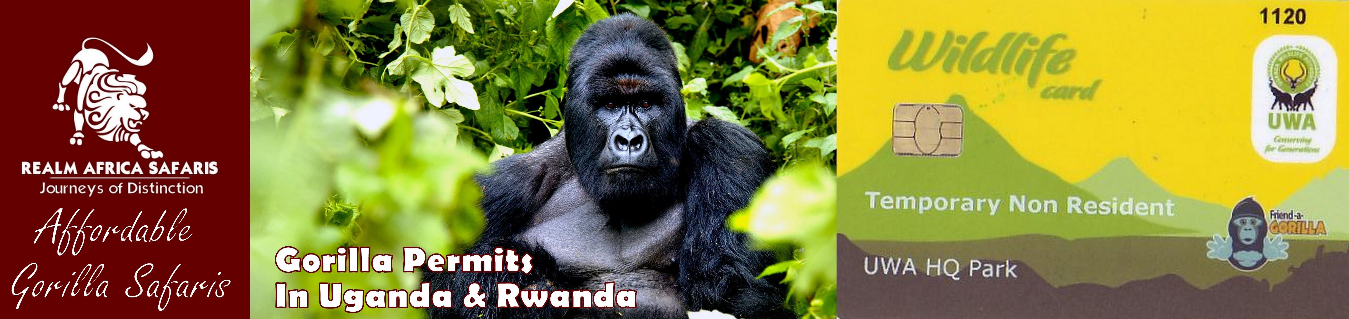 Gorilla Permits in Uganda & Rwanda