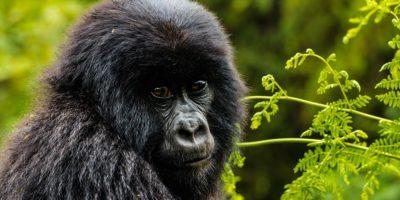 10 Days Gorillas, Ngorongoro & Serengeti
