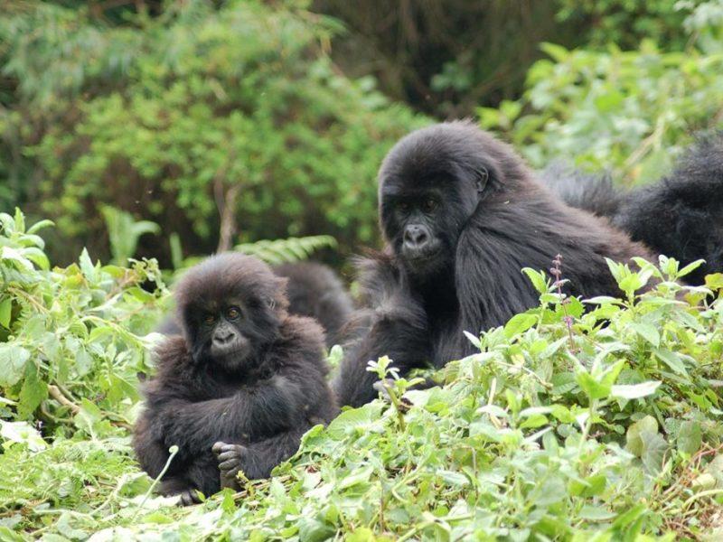 Top 10 East African Safari Holidays
