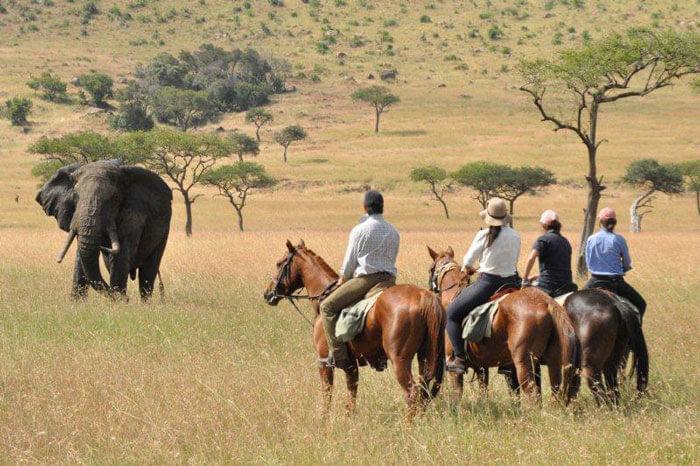 8 Days Kenya Horseback Safari - Experience Kenya Off ...