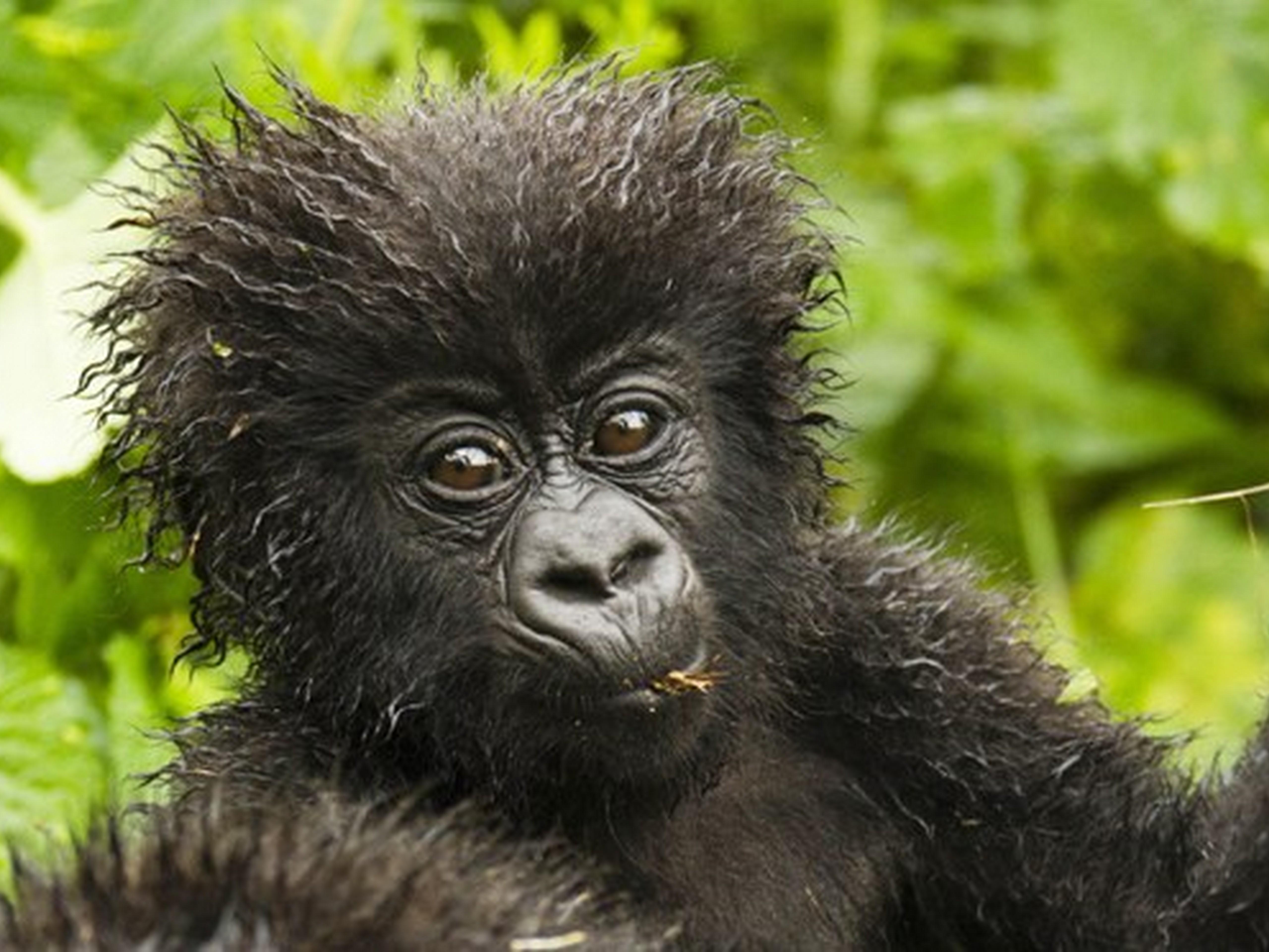 Top 10 Rwanda Experiences
